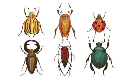 Hard-winged Bugs and Insects Isolated on White Background Vector Set