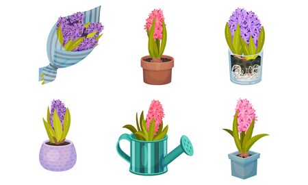 Hyacinth Bulbous Plant Growing in Flowerpot and Wrapped in Packing Paper Vector Set Ilustração