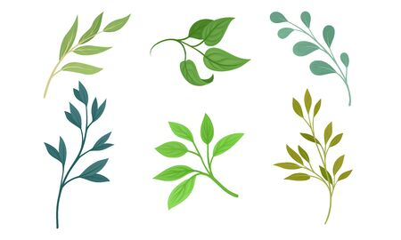 Green Twigs and Branches with Leaves Vector Set Vector Illustration