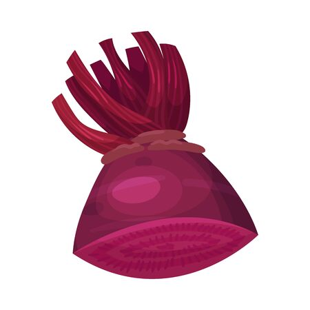 Halved Beet Root with Red Core Vector Illustration. Raw Purple Organic Vegetable and Agricultural Crop for Healthy Eating Illusztráció