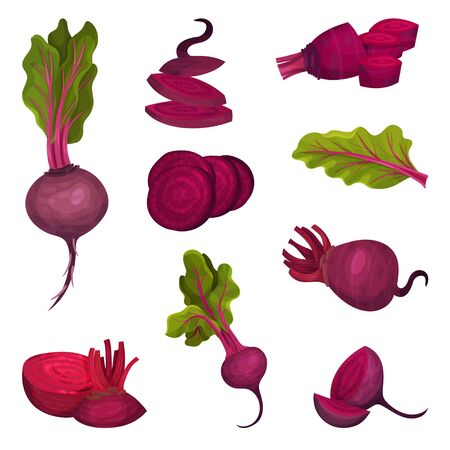 Beet Root with Green Top Leaves Cut and Whole Vector Set. Raw Purple Organic Vegetable and Agricultural Crop for Healthy Eating Illusztráció