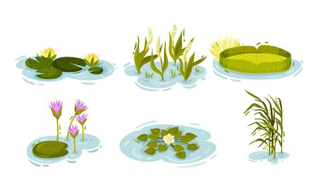 Water and Swamp Plants with Waterlily and Reed Vector Set Illustration