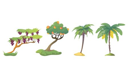 Different Fruit Trees with Thick Tree Crown and Fruits Vector Set Illustration