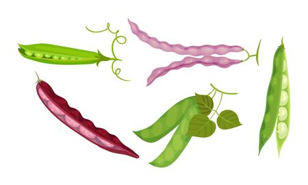 Leguminous Plants with Open Pods and Beans Inside Vector Set. Agricultural Crop for Vegetarian Nutrition Concept