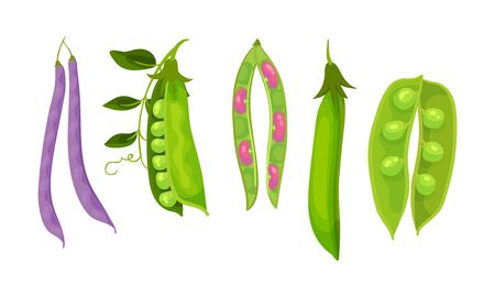 Leguminous Plants with Open Pods and Beans Inside Vector Set