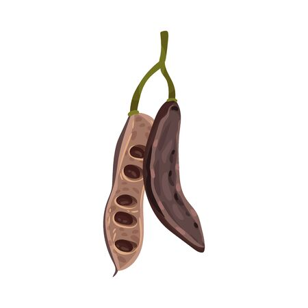 Carob Pod with Seeds Inside Isolated on White Background Vector Illustration