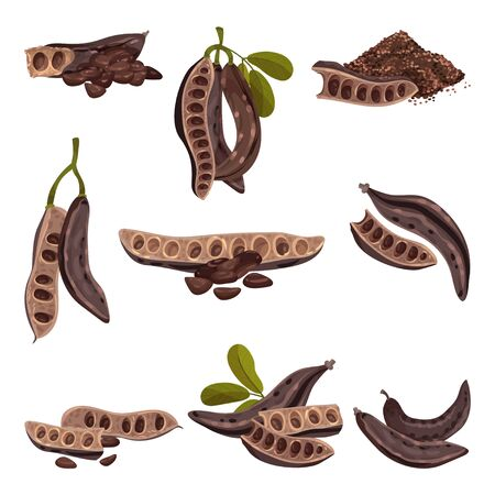 Carob Pod with Seeds Inside Isolated on White Background Vector Set  イラスト・ベクター素材