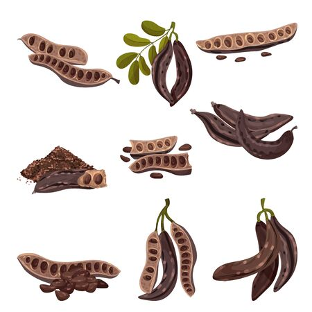 Carob Pod with Seeds Inside Isolated on White Background Vector Set