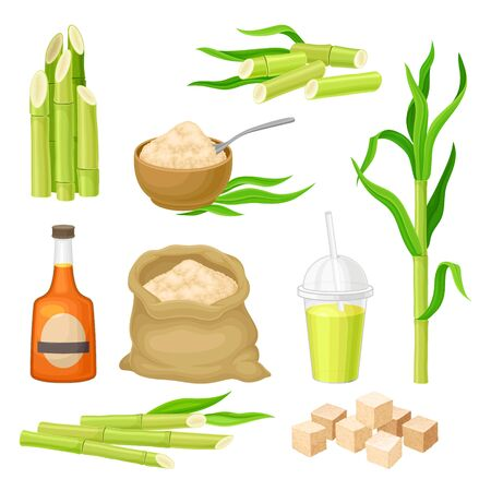 Sugarcane Plant and Manufactured from it Products Vector Set Vektorové ilustrace