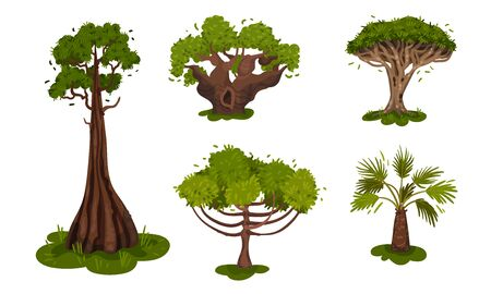 Green Deciduous Trees with Exuberant Tree Crown Vector Set. Wild Botanical Environment with Tropical and Subtropical Arbor