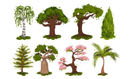 Green Deciduous Trees with Exuberant Tree Crown Vector Set. Wild Botanical Environment with Tropical and Subtropical Arbor Illustration