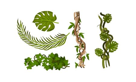 Twisted Wild Lianas with Green Twining Plants Vector Set. Tropical Rainforest LWild Flora with Green Leaves Concept