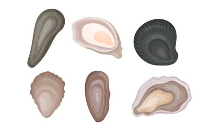 Oyster Shells of Different Shapes Vector Set