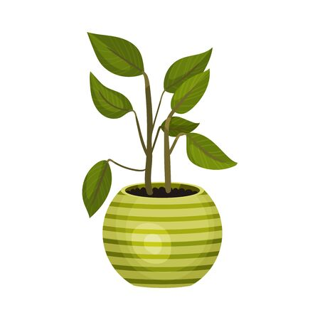 House Plant with Pointed Leaves Growing in Pot Vector Illustration