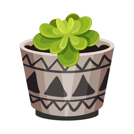 House Plant with Rounded Leaves Growing in Pot Vector Illustration. Home Interior Decor and Botanical Decoration Concept