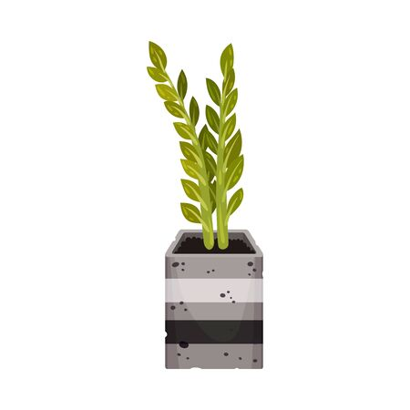 House Plant with Pointed Leaves Growing in Pot Vector Illustration. Home Interior Decor and Botanical Decoration Concept