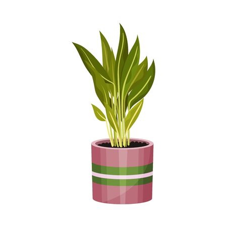 House Plant with Long Pointed Leaves Growing in Pot Vector Illustration. Home Interior Decor and Botanical Decoration Concept