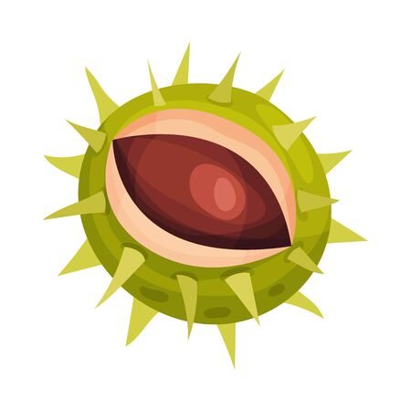 Chestnut with Thorned Shell and Brown Nut Inside Vector Illustration