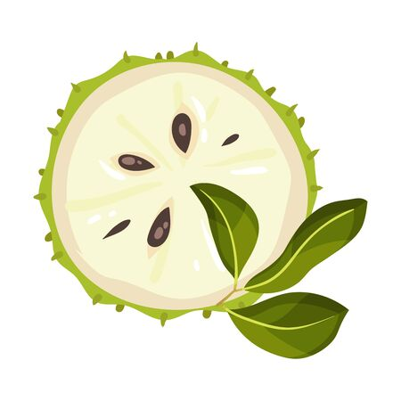 Halved Soursop Fruit or Guanabana with Dark Green Rind Covered with Thick Thorns Vector Illustration. Ripe Sugar Apple with Creamy White Flesh and Black Seeds Illustration