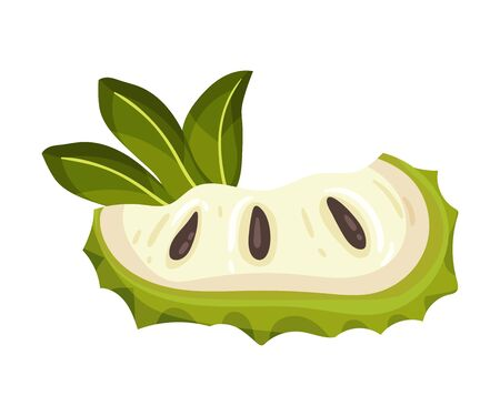 Slice of Soursop Fruit or Guanabana with Dark Green Rind Covered with Thick Thorns Vector Illustration