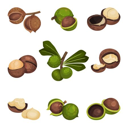 Whole Macadamia Nut and with Cracked Shell Vector Set