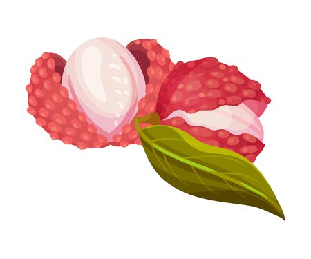 Lychee Fruit with Sweet Flesh in Rough Red Skin Vector Illustration Illustration