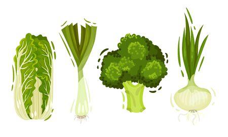 Green Vegetables with Cabbage and Onion Set Ilustración de vector