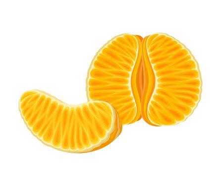 Fresh Peeled and Halved Mandarin or Tangerine Fruit Isolated on White Background Vector Illustration