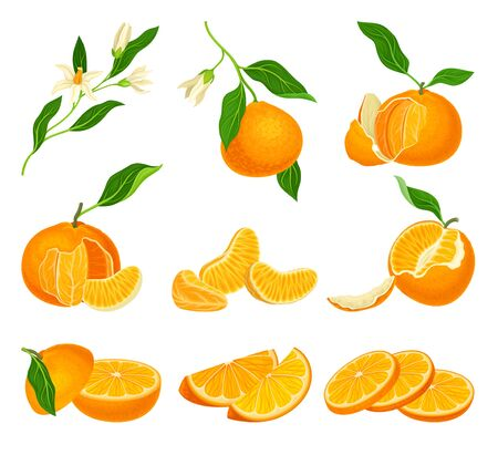 Orange Mandarin Fruit Unpeeled and Skinless with Segments Vector Set. Tropical Sweet Ripe Citrus Fruit Concept