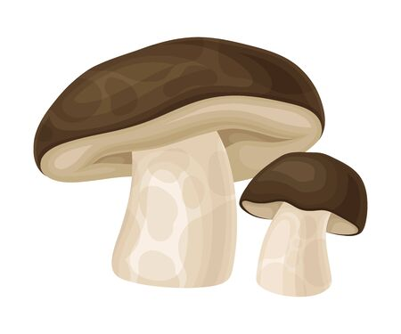 Forest Mushroom or Toadstool with Stem and Cap Isolated on White Background Vector Illustration