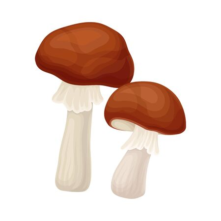 Forest Mushroom or Toadstool with Stem and Cap Isolated on White Background Vector Illustration. Seasonal Fleshy Spore-bearing Fruiting Body of Edible Fungus Concept