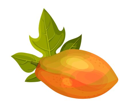 Whole Papaya Fruit with Green Leaf Vector Illustration. Ripe and Juicy Tropical Berry and Exotic Nutrition Concept