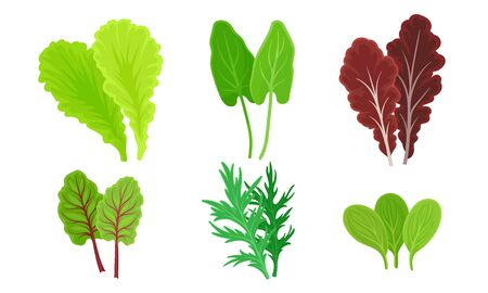 Green Leafy Vegetables with Lettuce Leaves and Dill Vector Set. Vitaminic Vegetarian Organic Salad Ingredients Иллюстрация