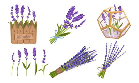 Lavender Floral Twigs Tied in Bunches, Growing in Flowerbed and Scattered Vector Set