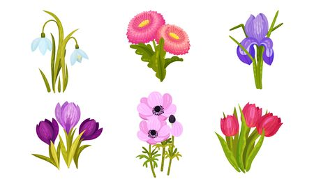 Spring Flowers Growing in Garden on Flowerbeds Vector Set