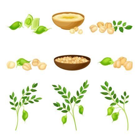 Chickpea as Annual Legume Plant with Green Stems and Proteinic Beige Peas Poured in Bowl Vector Set. Cultivated Organic Agricultural Crop Widely Used as Food Ingredient