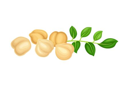 Chickpea Beige Pile with Green Branch as Annual Legume Plant Vector Illustration Illustration