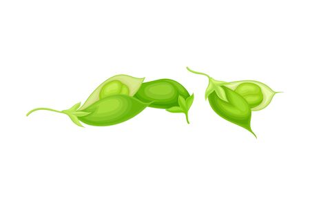 Green Pod of Chickpea as Annual Legume Plant with Green Proteinic Pea Inside Vector Illustration. Cultivated Organic Agricultural Crop Widely Used as Food Ingredient