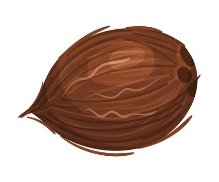 Whole Coconut with Brown Fibrous Husk Vector Illustration Illustration