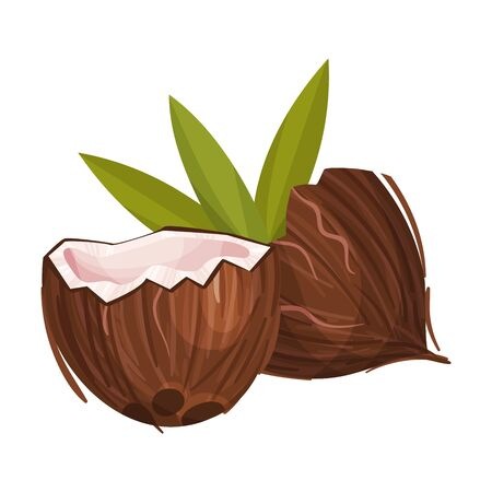 Halved Coconut with Hard Shell and Fibrous Husk and Pinnate Leaf Vector Illustration. Exotic Palm Tree Fruit as Food and Cosmetics Ingredient