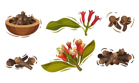 Dried Clove in Bowl and Blossomed Flower Buds Vector Set. Aromatic Seasoning Used in Culinary and Cosmetic Concept