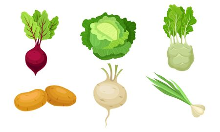 Agricultural Crops with Cabbage and Potatoes Vector Set