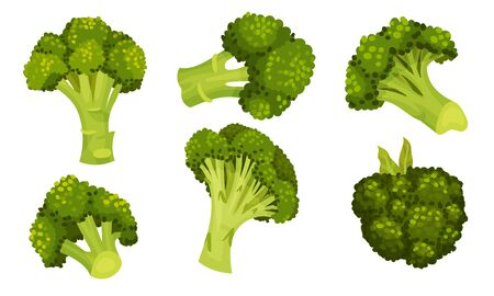 Green Broccoli Cabbage on Stalk as Healthy Nutrition Vector Set