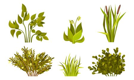 Different Lush Bushes and Grass with Reed Plant Set