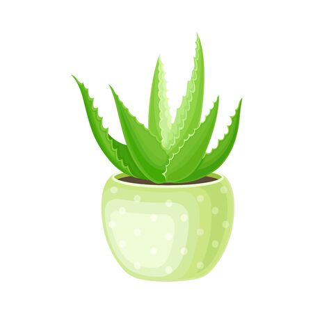 Aloe Vera Rosette of Large, Thick, Fleshy Leaves Growing in Pot as Indoor Flora Vector Illustration. Green Tubular Stemless Succulent Plant Cultivated for Assorted Pharmaceutical Purposes