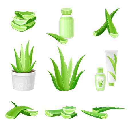Aloe Vera as Ingredient for Cosmetic Products Vector Set. Green Tubular Plant Cultivated for Assorted Pharmaceutical Purposes