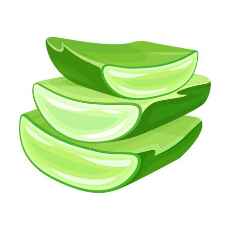 Aloe Vera Thick Fleshy Leaves Pieces as Flowering Succulent Plant Vector Illustration. Green Tubular Plant Cultivated for Assorted Pharmaceutical Purposes