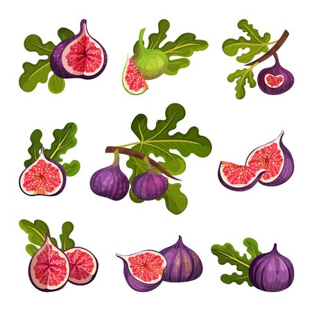 Fig Fruit Whole and Cut with Thin Skin and Many Small Seeds Inside Vector Set. Ripe Sweet Organic Food for Jam Preparation and Raw Vitaminic Eating