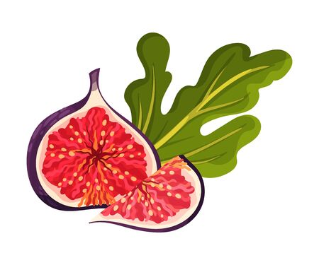 Fig Fruit Cross Section Showing Bright Flesh with Small Seeds Inside Vector Illustration. Ripe Sweet Organic Food for Jam Preparation and Raw Vitaminic Eating