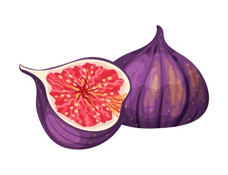 Cross Section of Fig Fruit Showing Bright Flesh with Small Seeds Inside Vector Illustration. Ripe Sweet Organic Food for Jam Preparation and Raw Vitaminic Eating